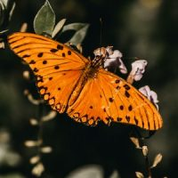 butterfly neu